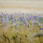 Középpont Blog | Válaszd az Életet!
